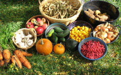 A plant based vegetarian and vegan diet is crucial for our survival
